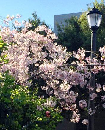 Berkeley Academic Calendar 2020-21 Home | Academic Personnel Office